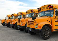Schulbus - School Bus